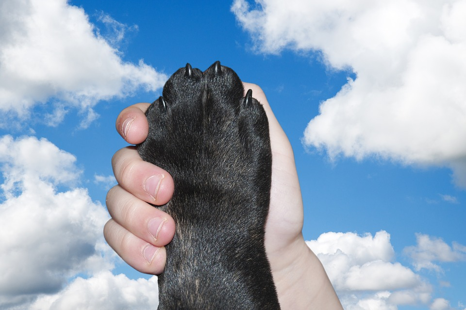 All About Emotional Support Animals8 min read